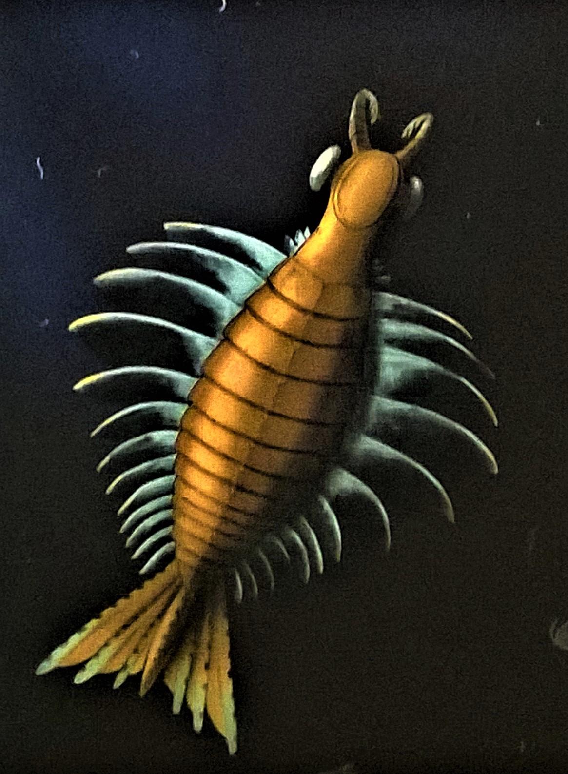 Trilobiitti